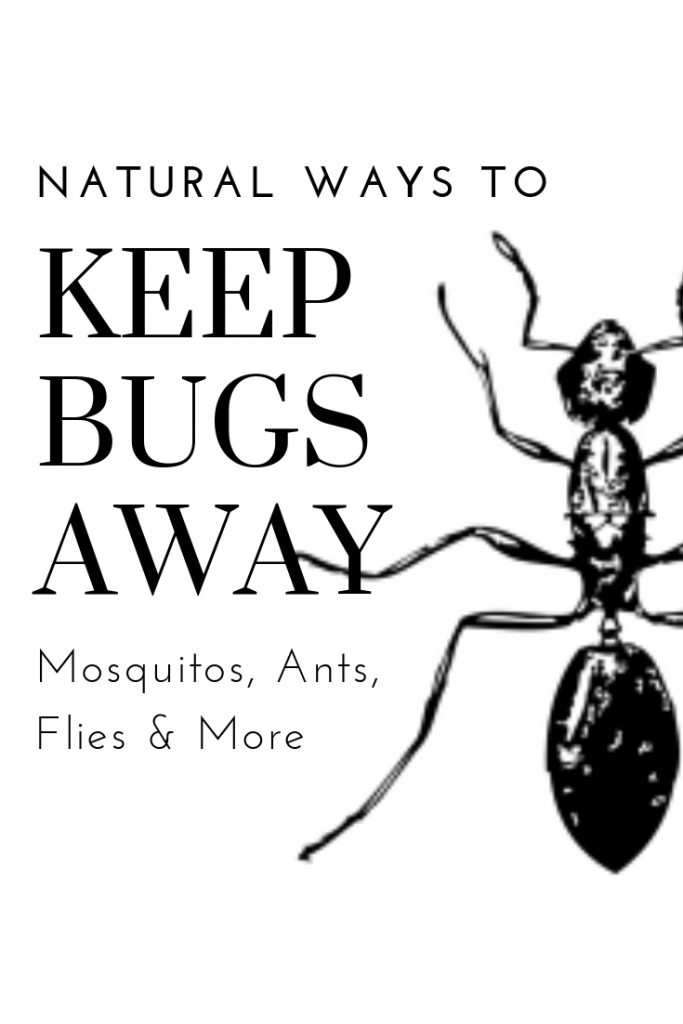 Tap here to learn easy and non-toxic ways to keep bugs away from your home and social events! #nontoxiccleaning #entertainingtips #cleaningtips #naturalliving