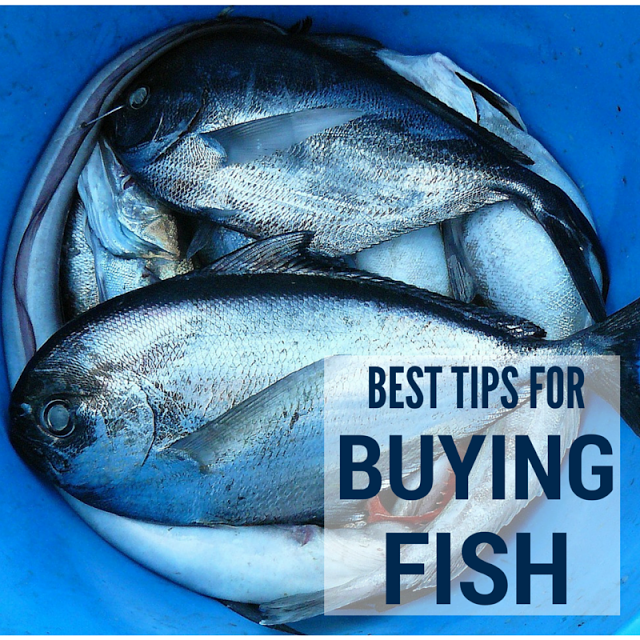 buying fish, fish, fish buying tips